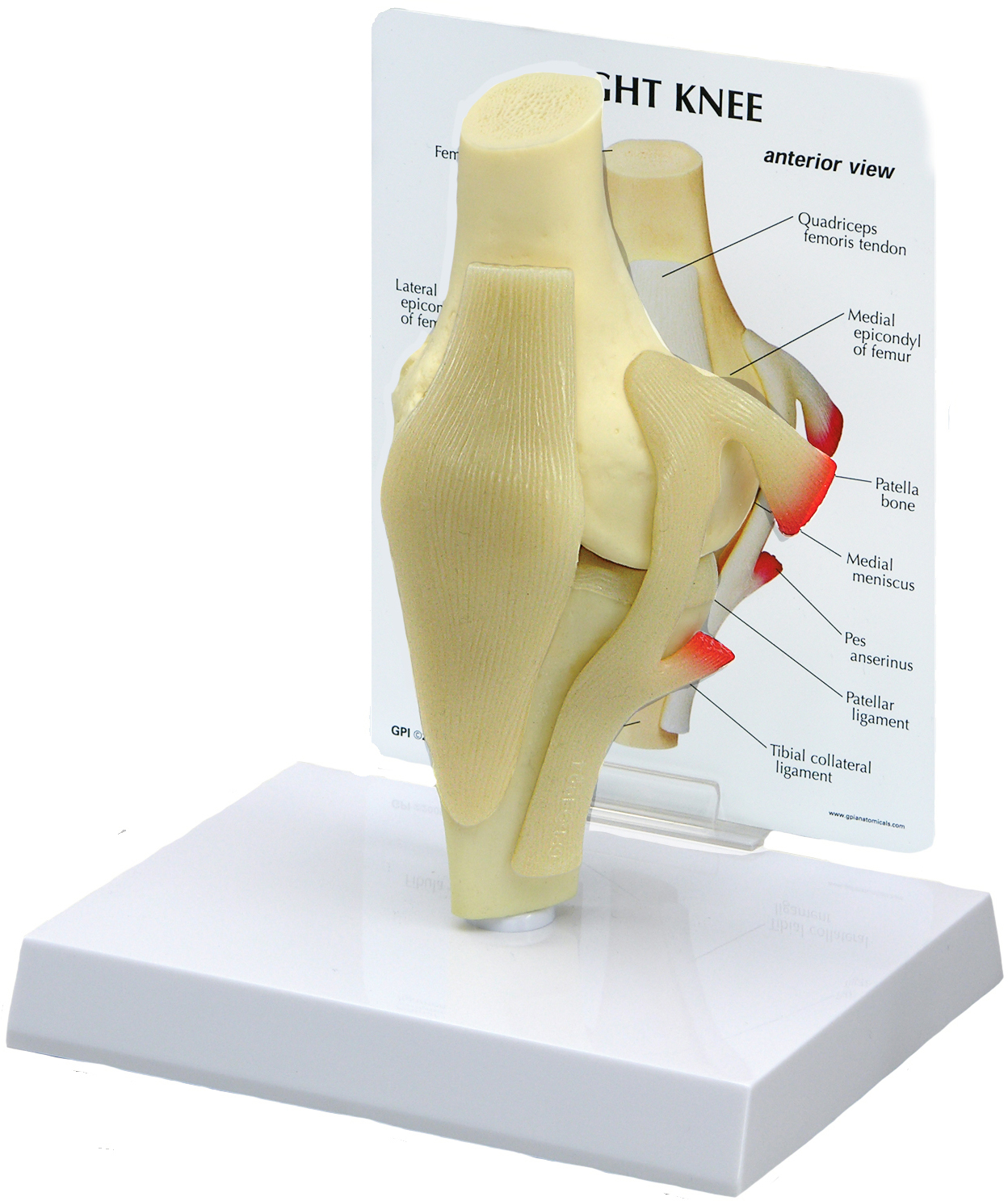 fighting the reproduction of skin and bone models About crc press crc press is a premier global publisher of science, technology, and medical resources we offer unique, trusted content by expert authors.
